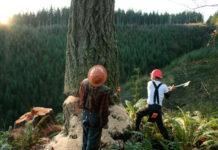 šume drvosječe