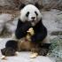 CHINA ZOO PANDA