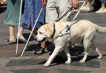 bijeli štap pas vodič